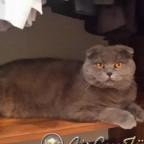Kedimiz